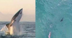 allarme squali in Italia
