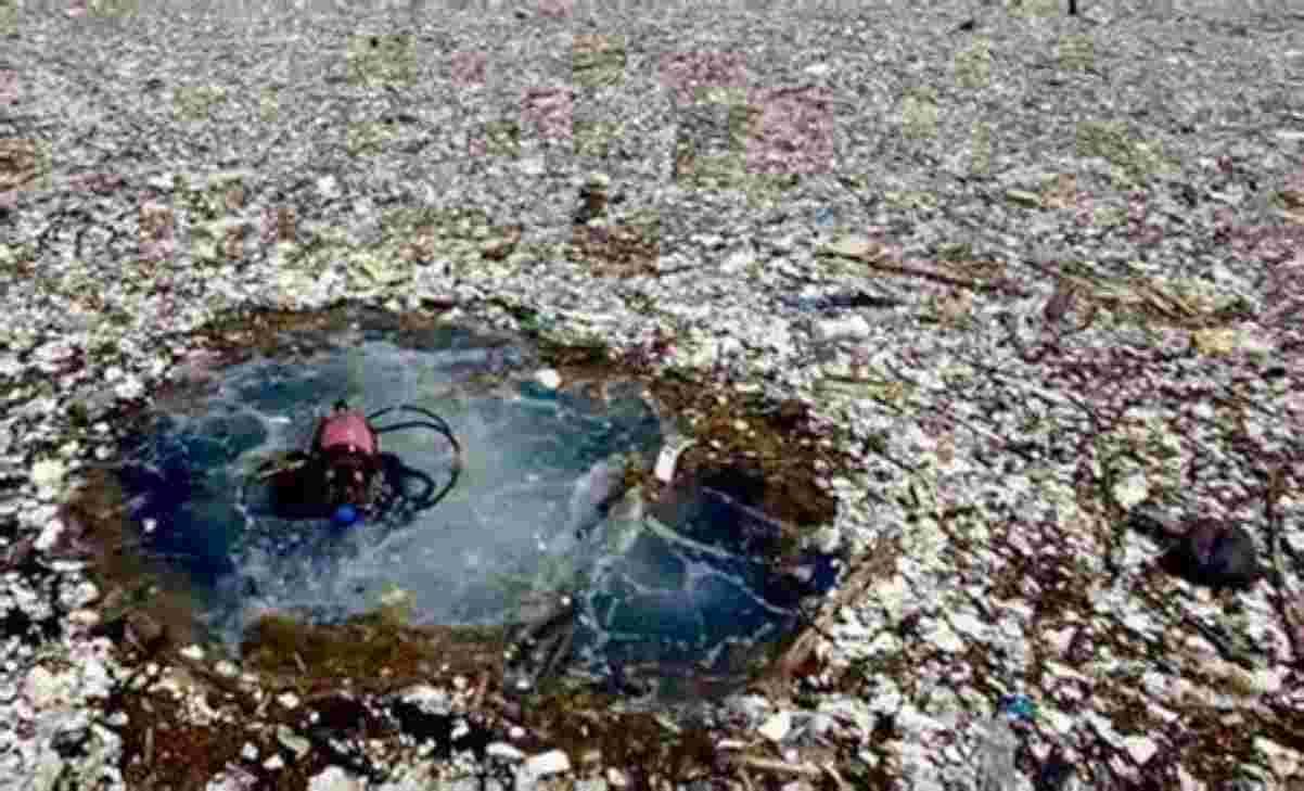 Risultati immagini per isola di plastica
