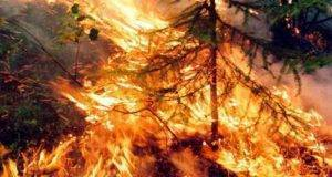 Incendio in Siberia