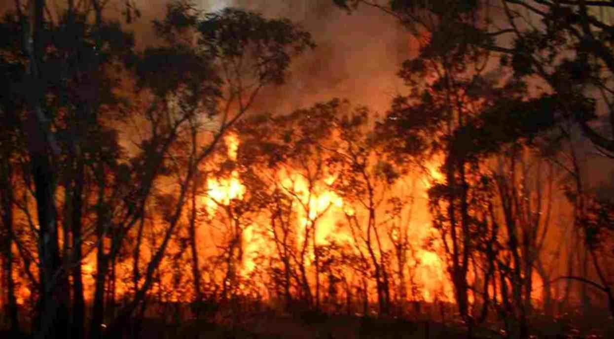 Incendi nelle foreste