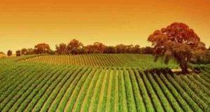 Agricoltura biologica, lo strano effetto che ha sull'ambiente