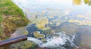 Cocaina nei fiumi, tutti i danni all'ambiente e alle specie animali