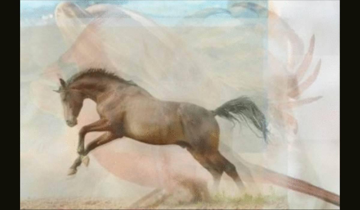 Test animali.-cavallo e delfino