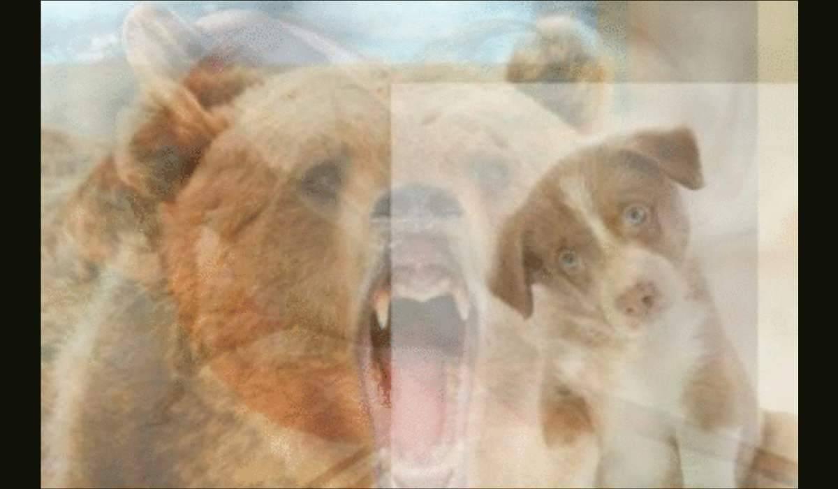 test animali-orso e cane