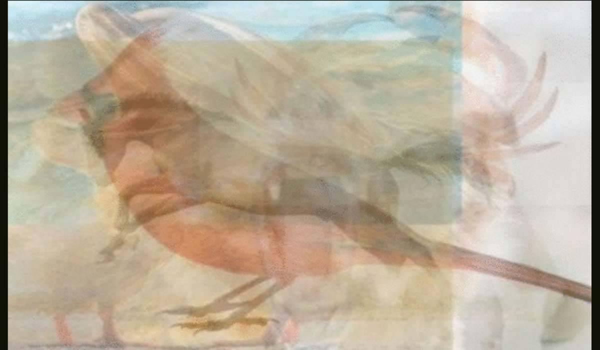 Test animali- cavallo e uccello