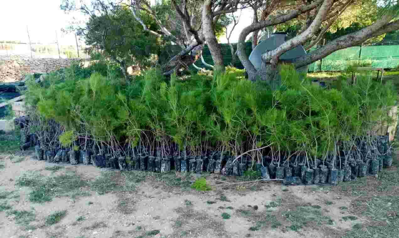 Lampedusa, 6.500 alberi per ripristinare il contesto naturale dell'isola