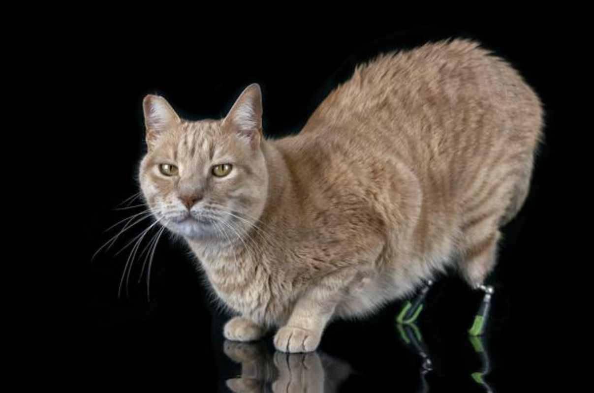 Vito, la storia del gatto bionico che ha commosso il web