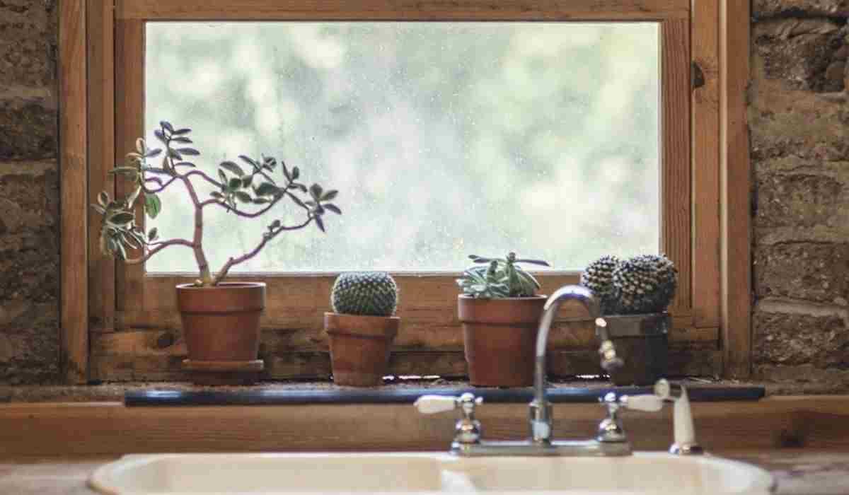 Edera Pianta Da Interno le 6 piante d'appartamento che purificano l'aria nella tua casa