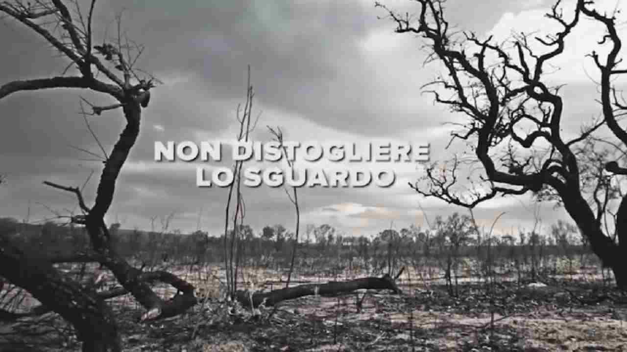 WWF, giornata del suolo: in fumo 12 milioni di ettari solo in Amazzonia