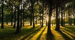alberi mangia smog