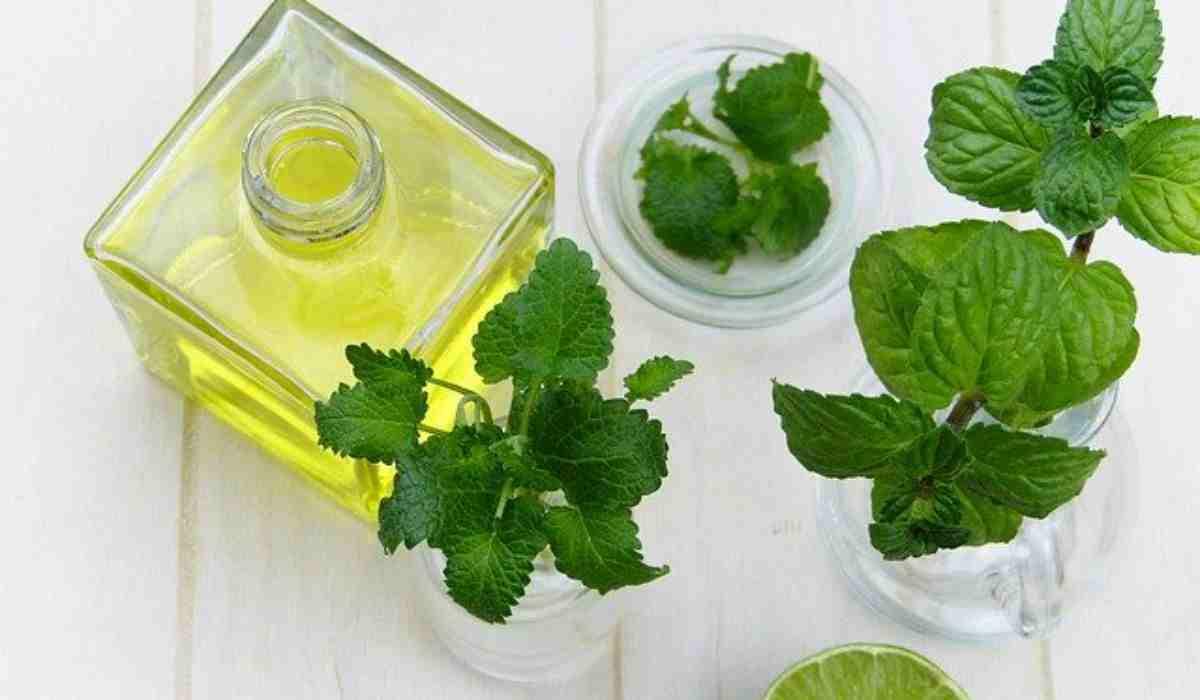 Olio Essenziale Di Menta Piperita I 6 Benefici Per La Salute