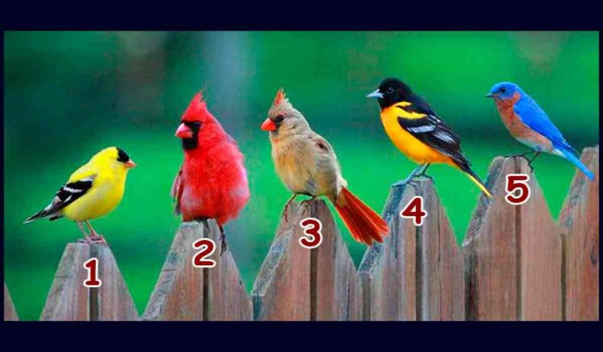 TEST: l'uccello che più ti piace svela cosa sbagli nelle relazioni e dovresti cambiare