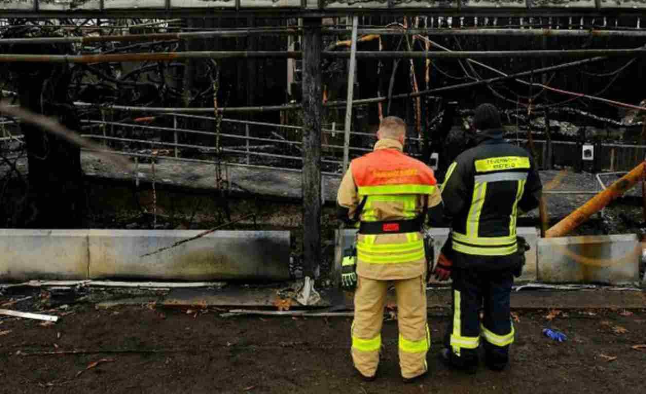 Zoo bruciato in Germania, trovate le responsabili della tragedia: trenta animali bruciati vivi