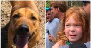 bimba salvata dal suo cane