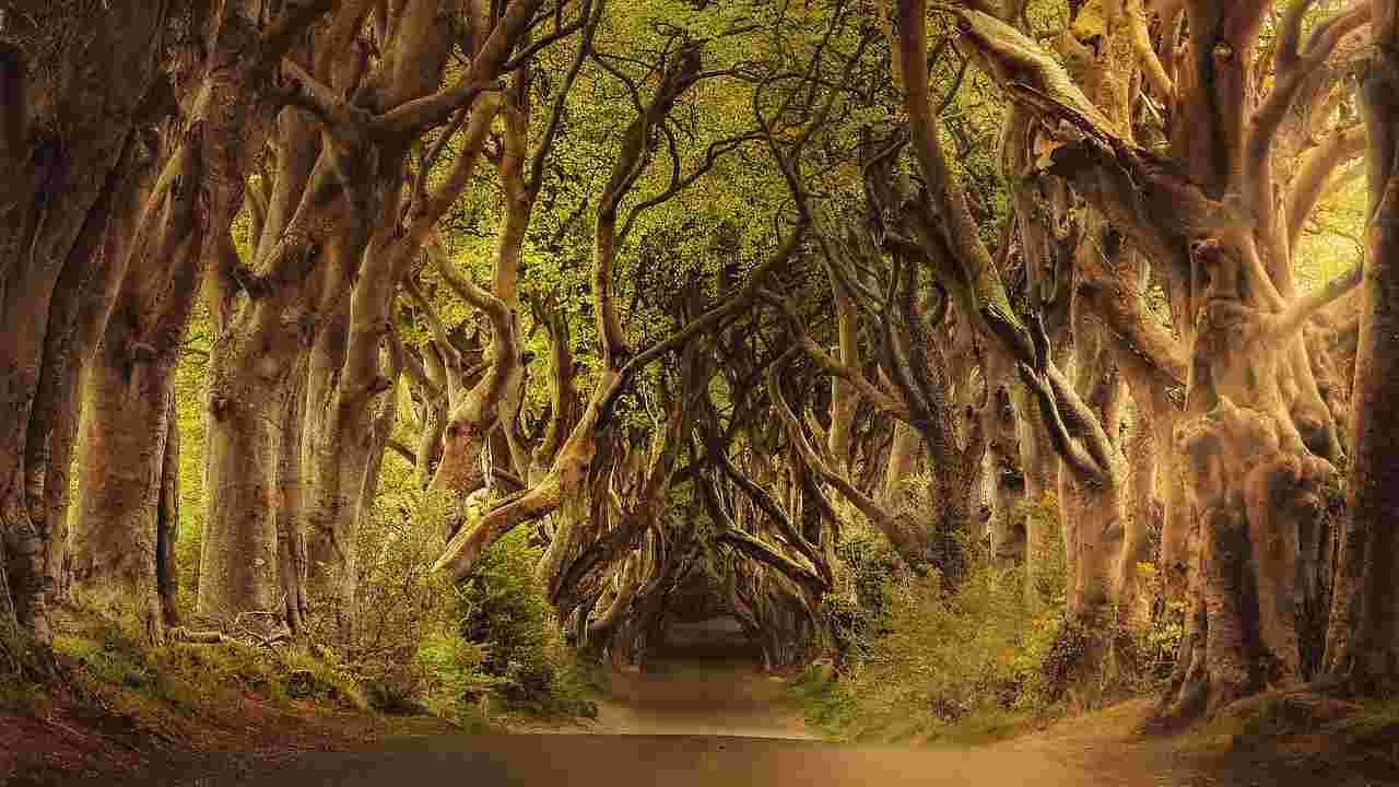 Deforestazione: la Gran Bretagna pianterà 50 milioni di alberi