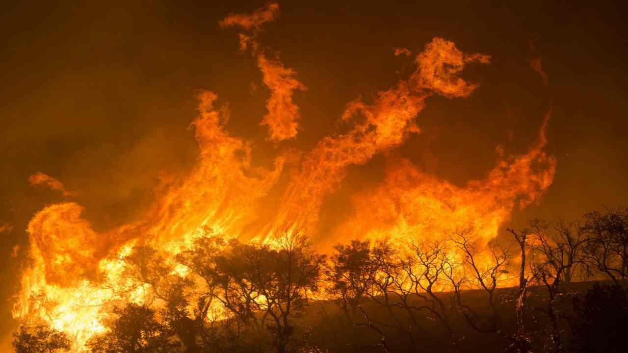 Parco Nazionale di Biebrza, brucia la patria delle Alci: ecco cosa sta accadendo