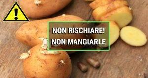 patate germogliate sono tossiche?