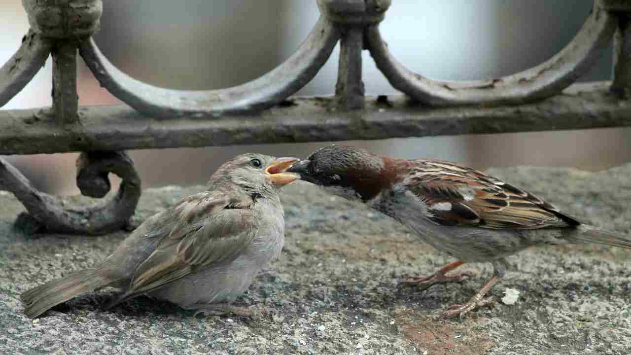 uccelli balcone