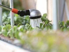 acqua ossigenata piante