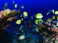 barriera corallina sopravvivere