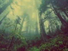 boschi d'Italia