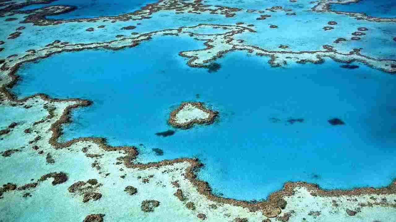 coralli australiani