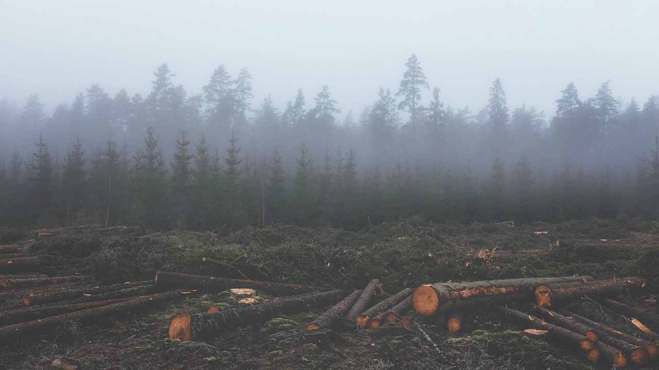 deforestazione cala