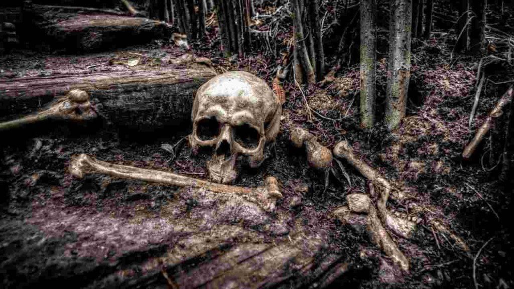 homo sapiens resti