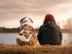 Animal social bonus