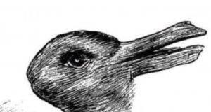 vedi un coniglio o un anatra