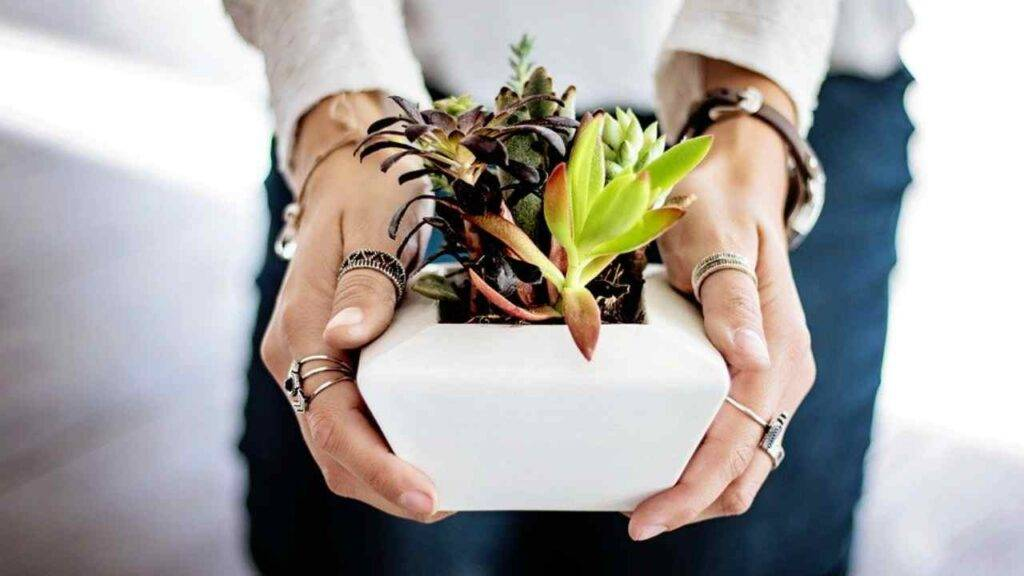 curare piante vacanza