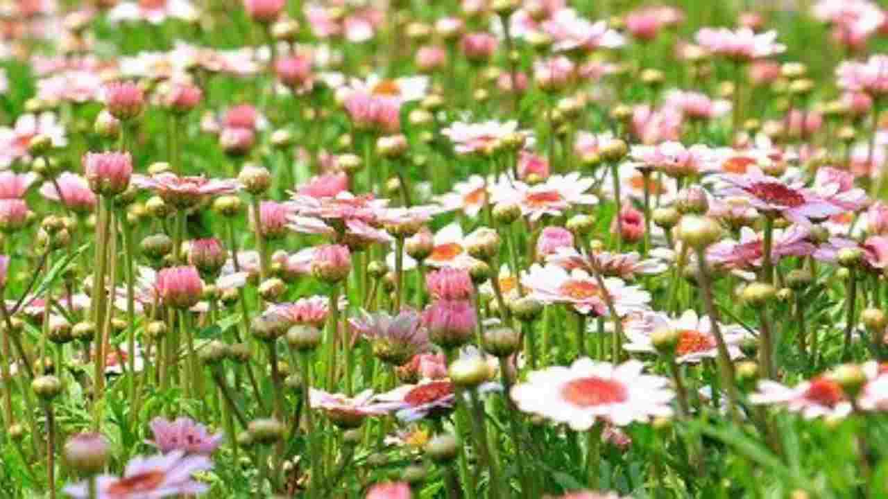 fiori profumo
