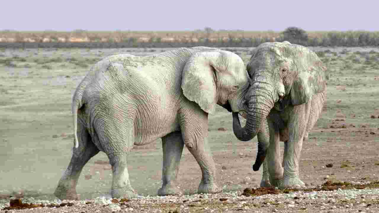 ragazza uccisa elefanti
