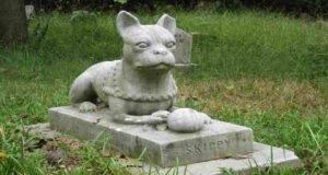 seppellire cani e gatti
