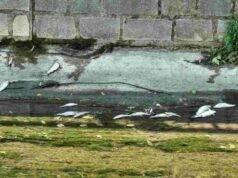 strage pesci olona