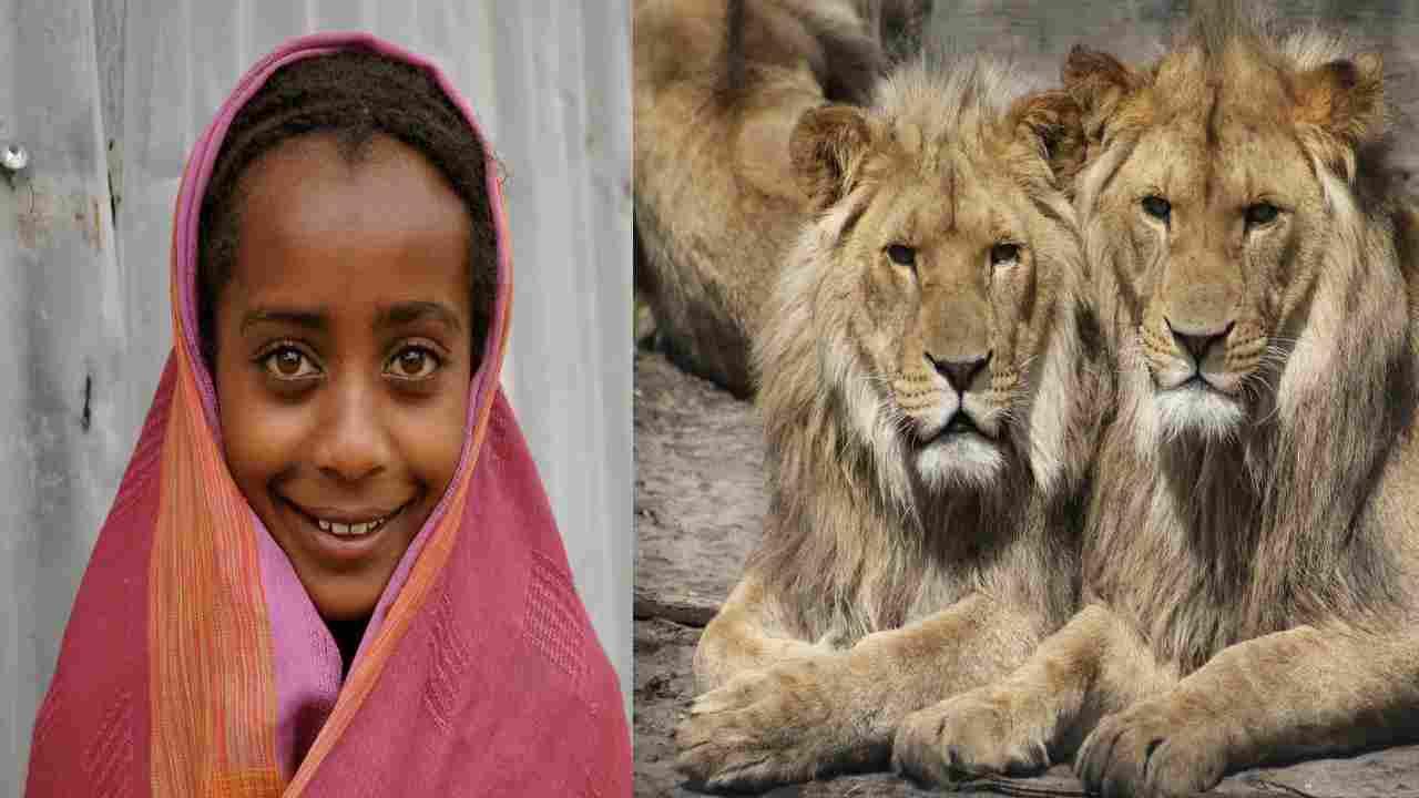 leoni salvano bambina