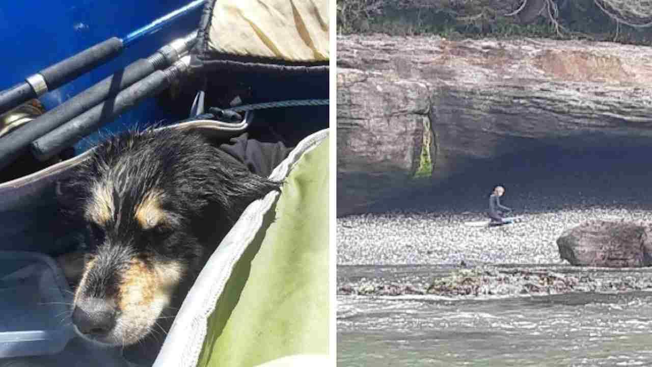 Cane salvato grotta