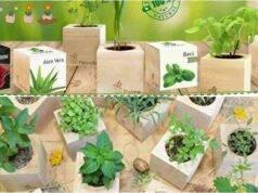 EcoCube giardino ufficio