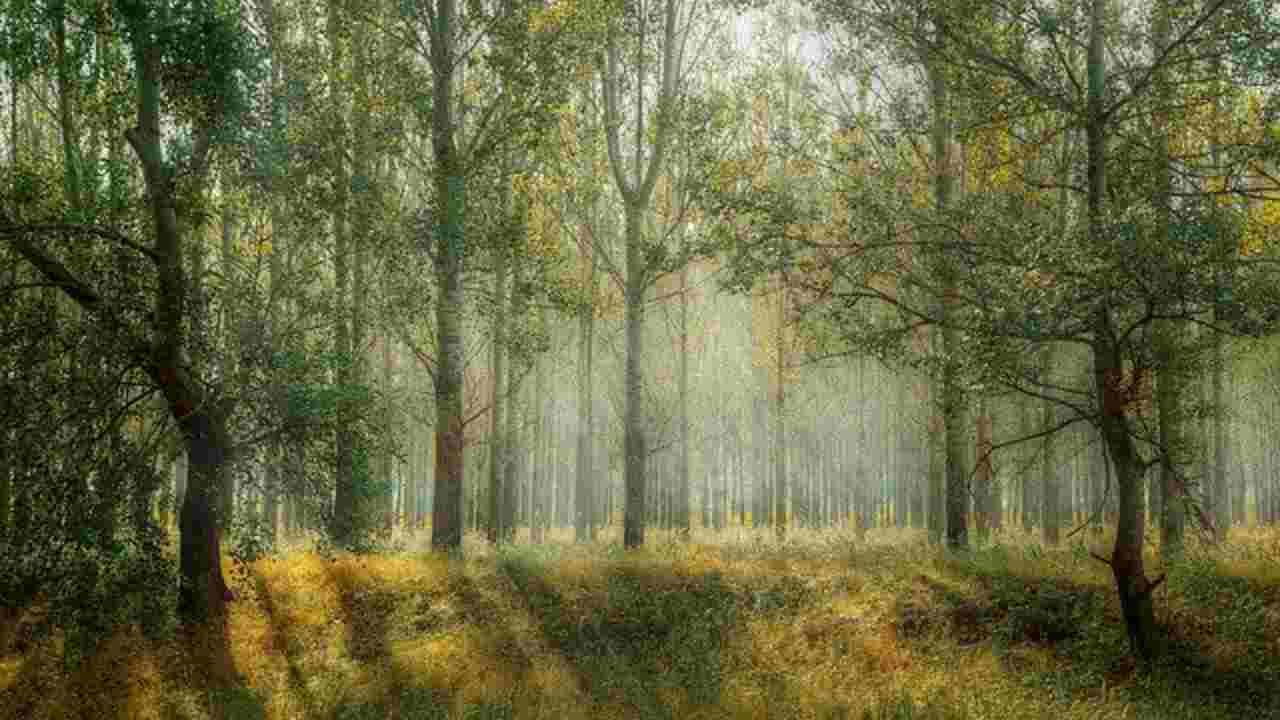 Foresta collecchio