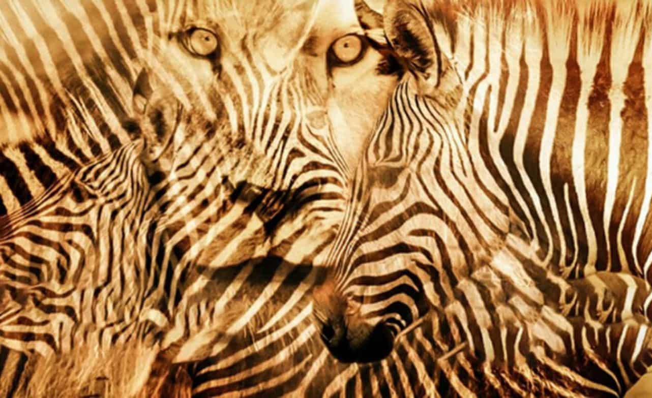 quale animale vedi subito?
