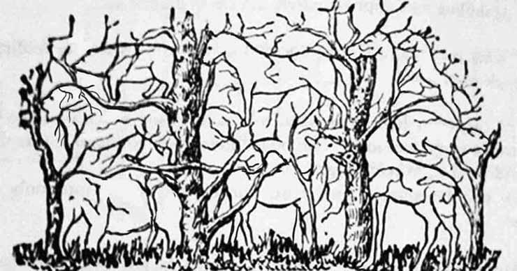 animali nel bosco