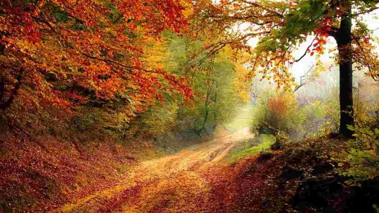 Foreste cambiamento climatico