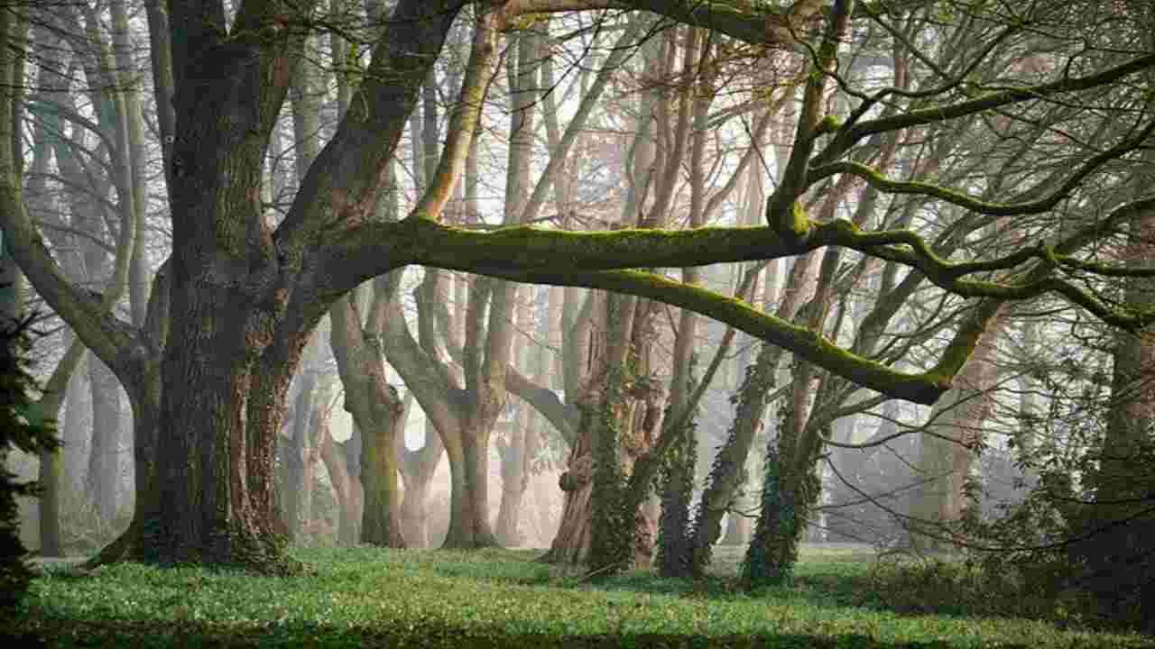 foreste italiane