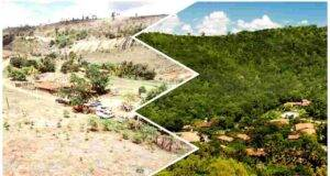 ecologisti foresta nuova
