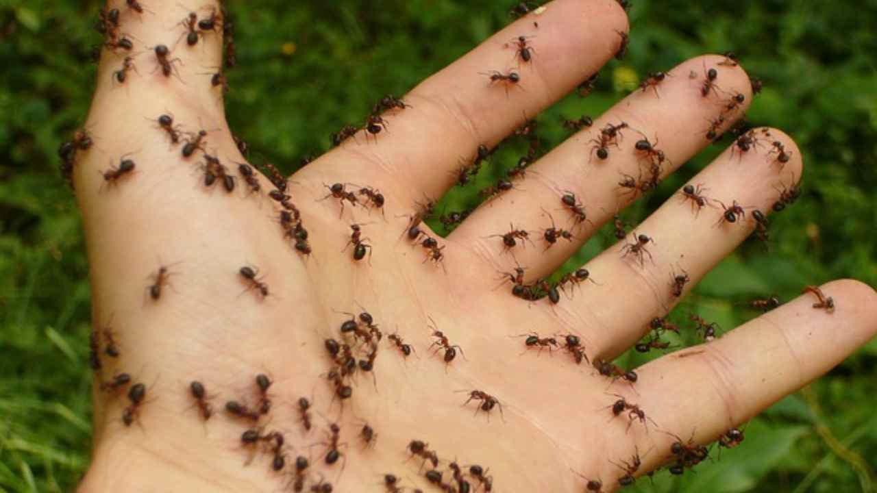 rimedi naturali formiche