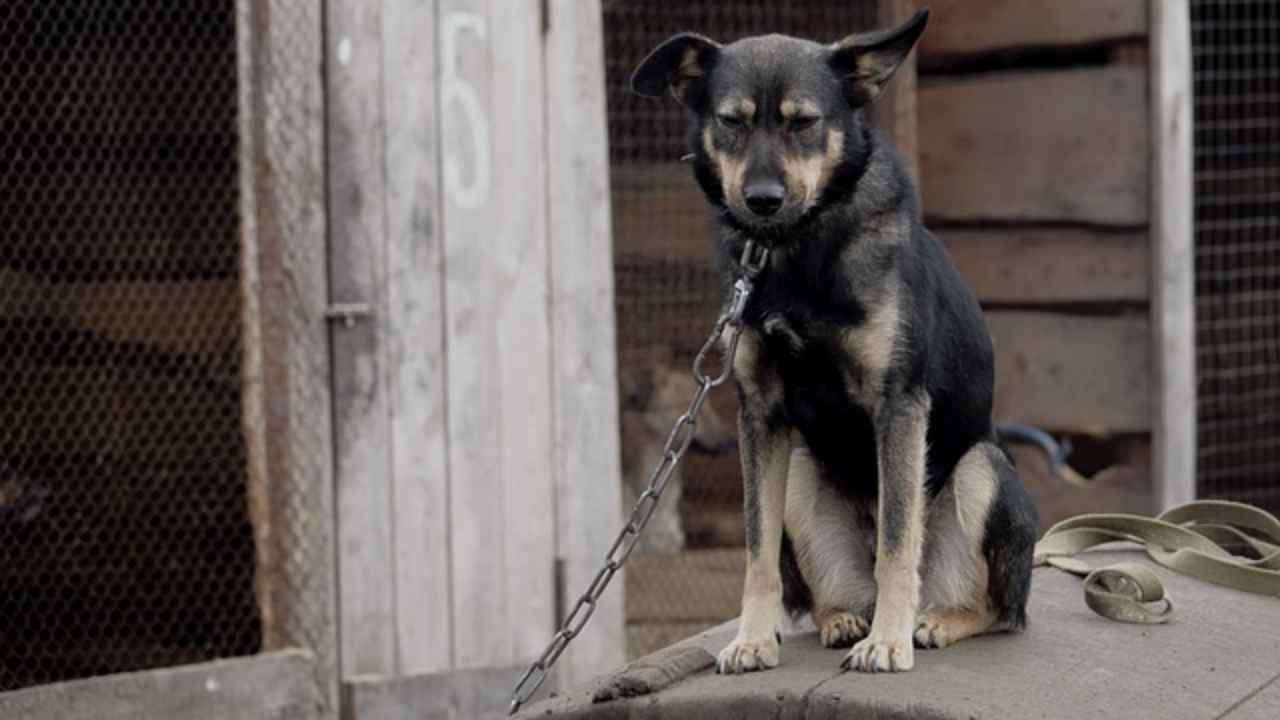 viareggio divieto catena cani