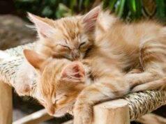gatti Rozzano
