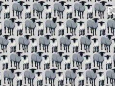 Vedi il lupo tra le pecore?
