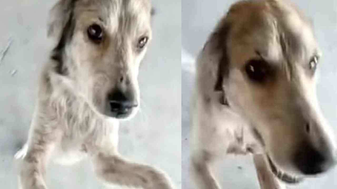 Coco il cane scomparso e ritrovato