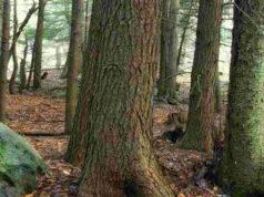nasce il progetto i custodi della biodiversità
